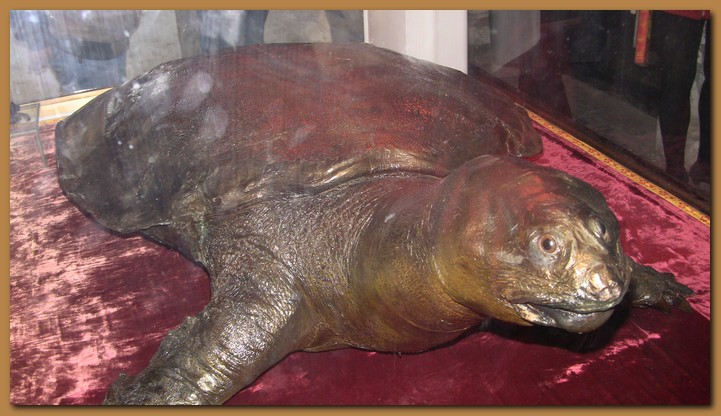 Vietnam hanoi lago hoan kiem for Lago per tartarughe